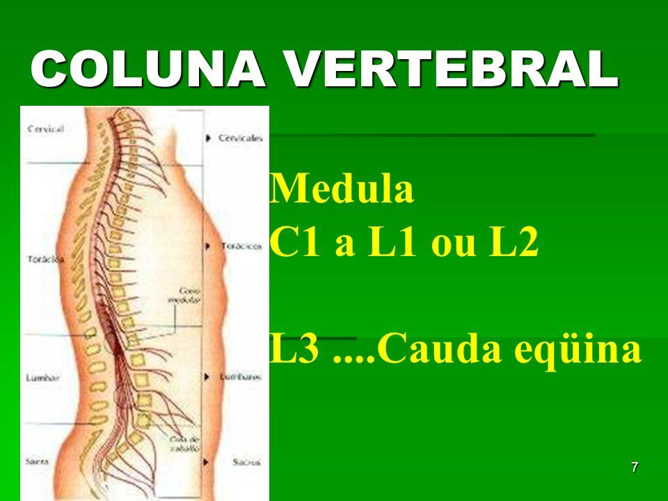 COLUNA VERTEBRAL Medula C1 a L1 ou L2 L3 ....Cauda eqüina