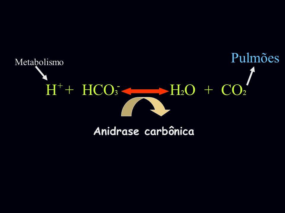 Pulmões Metabolismo H + HCO3 H2O + CO2 + - Anidrase carbônica