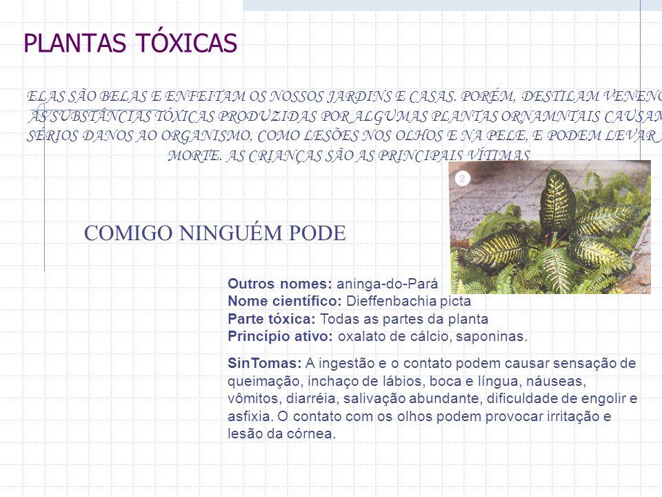 PLANTAS TÓXICAS COMIGO NINGUÉM PODE
