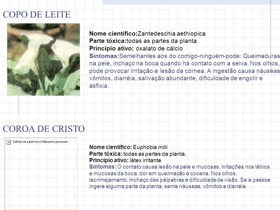 COPO DE LEITE COROA DE CRISTO