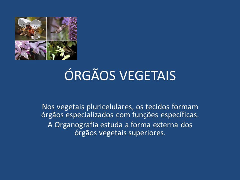 A Organografia estuda a forma externa dos órgãos vegetais superiores.