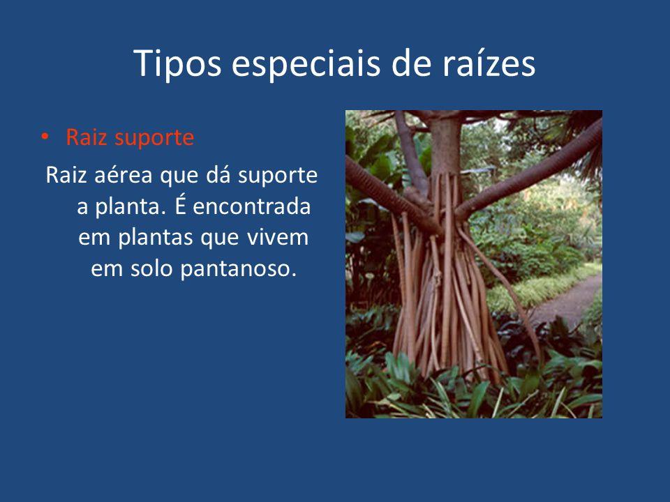 Tipos especiais de raízes