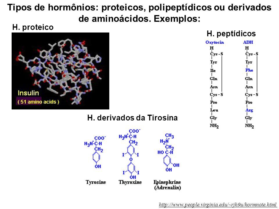H. derivados da Tirosina
