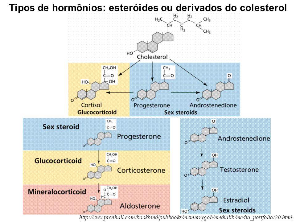 Tipos de hormônios: esteróides ou derivados do colesterol