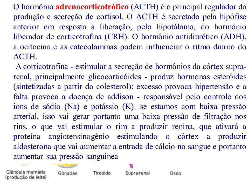O hormônio adrenocorticotrófico (ACTH) é o principal regulador da produção e secreção de cortisol. O ACTH é secretado pela hipófise anterior em resposta à liberação, pelo hipotálamo, do hormônio liberador de corticotrofina (CRH). O hormônio antidiurético (ADH), a ocitocina e as catecolaminas podem influenciar o ritmo diurno do ACTH.
