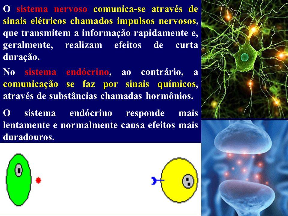O sistema nervoso comunica-se através de sinais elétricos chamados impulsos nervosos, que transmitem a informação rapidamente e, geralmente, realizam efeitos de curta duração.