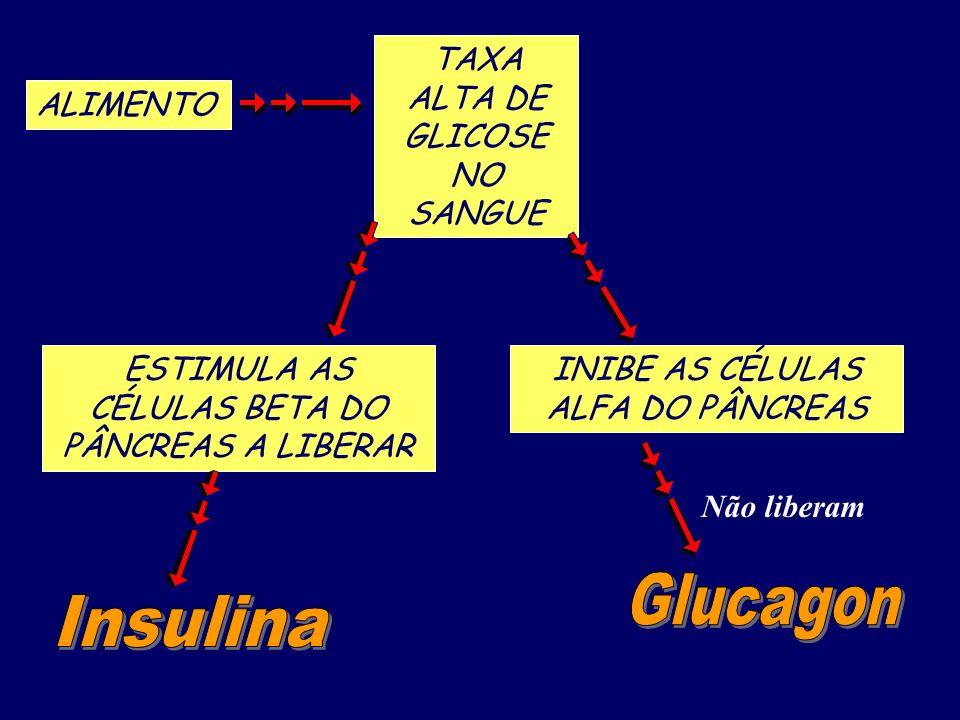 Glucagon Insulina TAXA ALTA DE GLICOSE NO SANGUE ALIMENTO