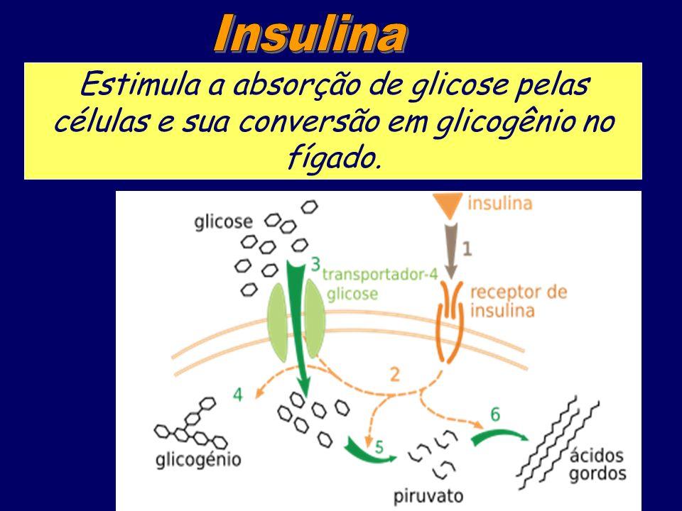 Insulina Estimula a absorção de glicose pelas células e sua conversão em glicogênio no fígado.