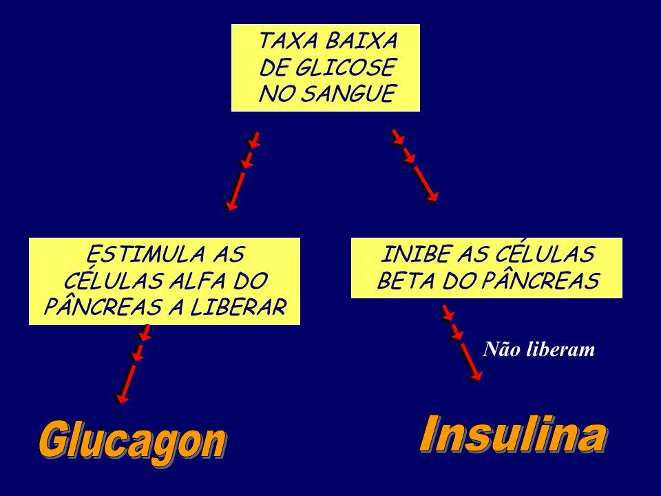 Insulina Glucagon TAXA BAIXA DE GLICOSE NO SANGUE