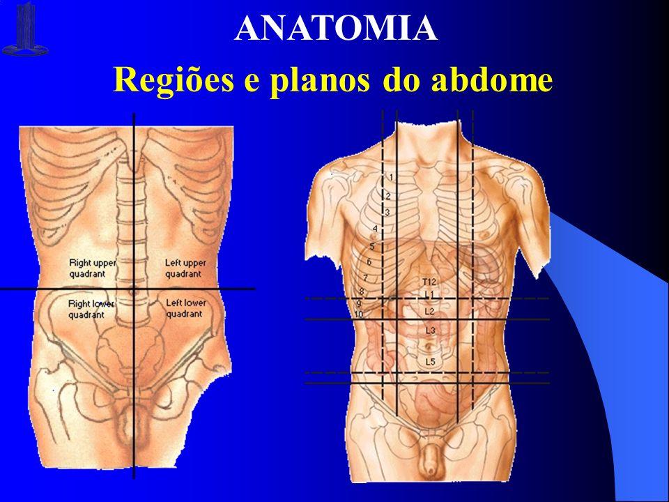 ANATOMIA Regiões e planos do abdome