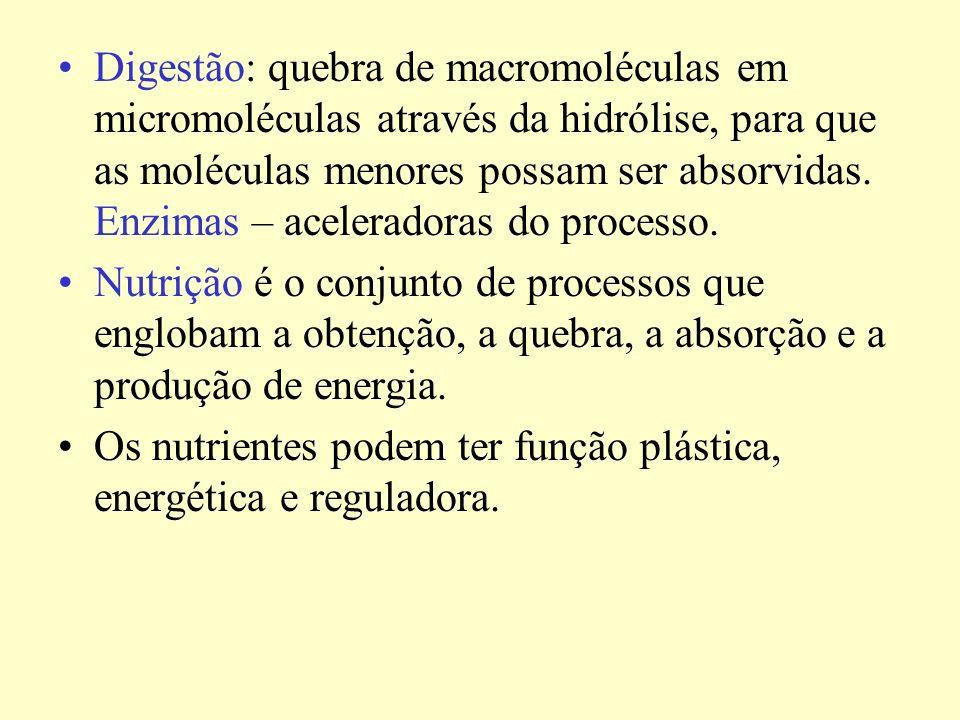 Digestão: quebra de macromoléculas em micromoléculas através da hidrólise, para que as moléculas menores possam ser absorvidas. Enzimas – aceleradoras do processo.