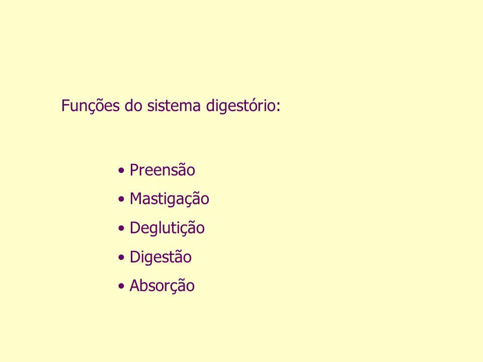 Funções do sistema digestório: