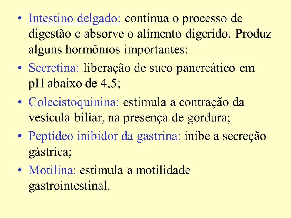 Intestino delgado: continua o processo de digestão e absorve o alimento digerido. Produz alguns hormônios importantes: