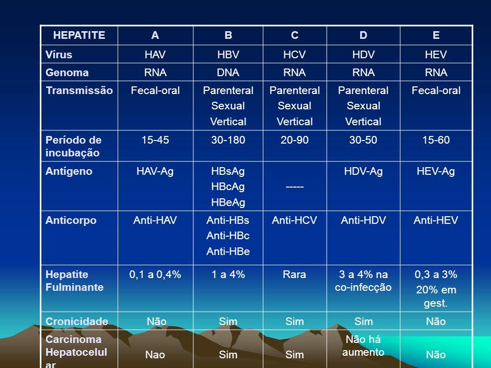 HEPATITEA. B. C. D. E. Vírus. HAV. HBV. HCV. HDV. HEV. Genoma. RNA. DNA. Transmissão. Fecal-oral. Parenteral.