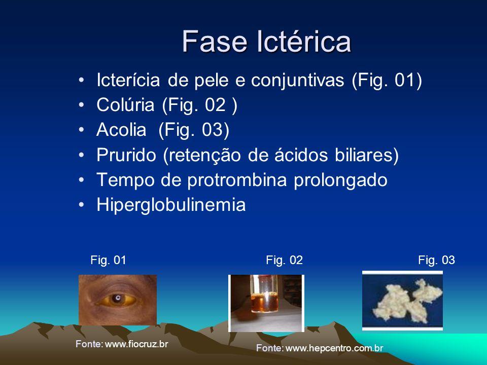 Fase Ictérica Fig. 01 Fig. 02 Fig. 03