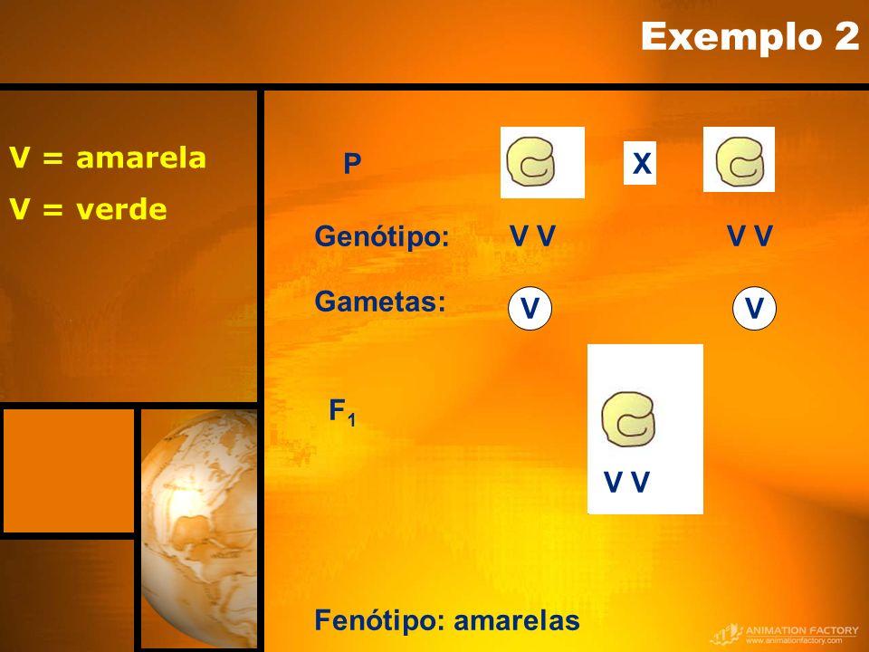 Exemplo 2 X V = amarela V = verde P Genótipo: V V Gametas: V F1 V V