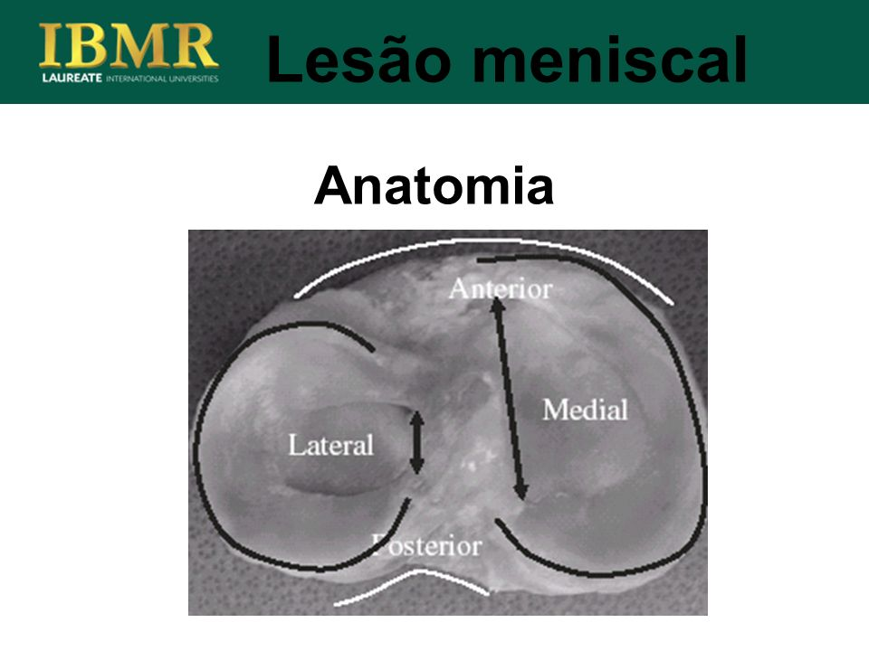 Lesão meniscal Anatomia