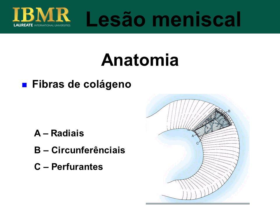 Anatomia Lesão meniscal Fibras de colágeno A – Radiais