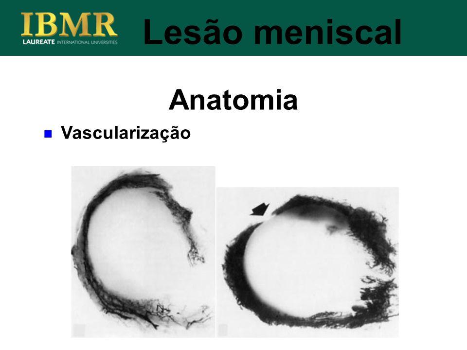 Lesão meniscal Anatomia Vascularização
