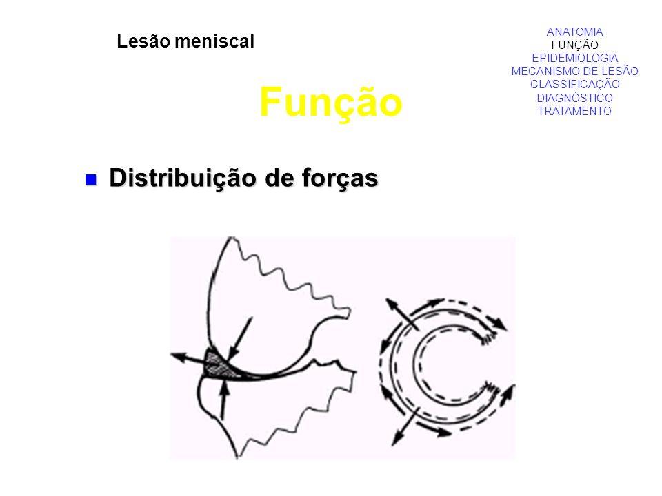 Função Distribuição de forças Lesão meniscal