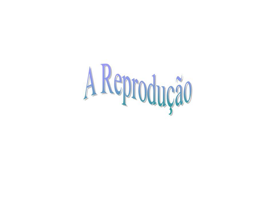 A Reprodução