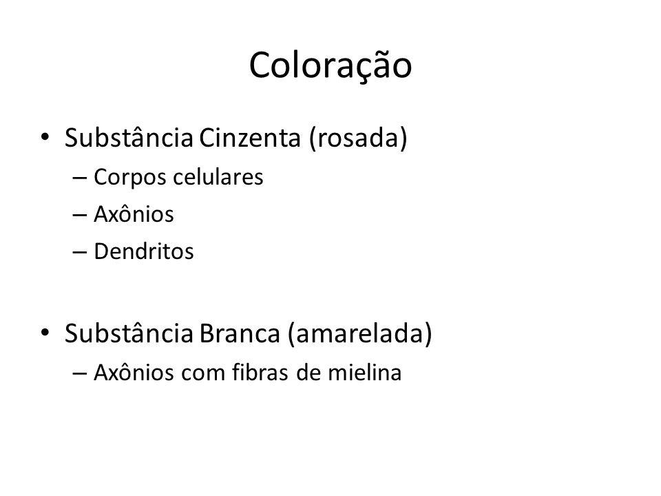 Coloração Substância Cinzenta (rosada) Substância Branca (amarelada)