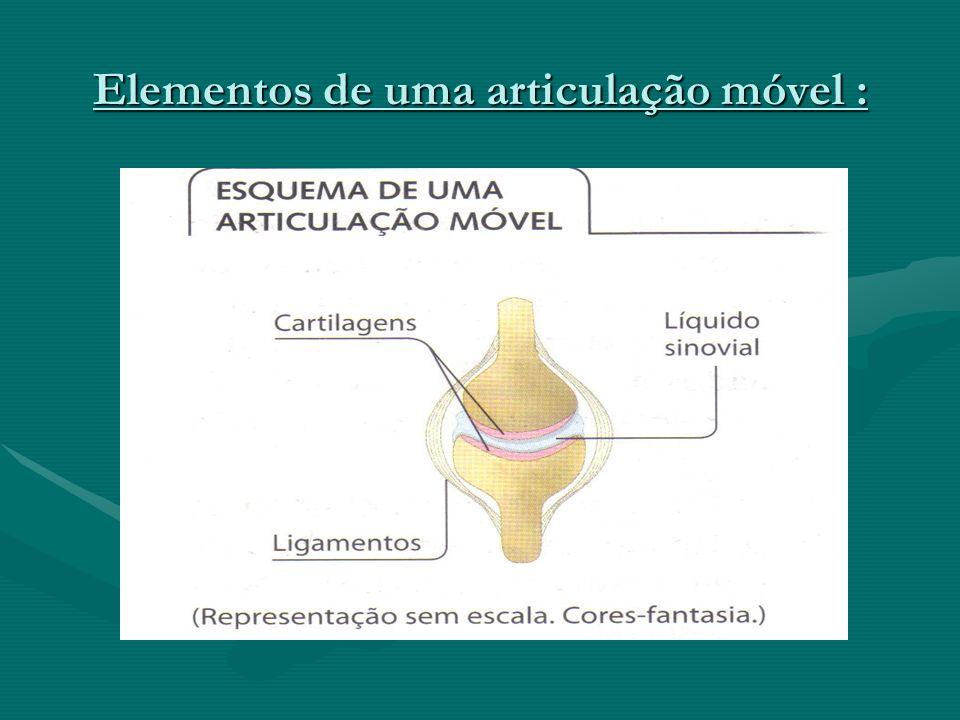 Elementos de uma articulação móvel :