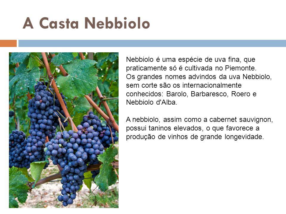 A Casta Nebbiolo Nebbiolo é uma espécie de uva fina, que praticamente só é cultivada no Piemonte.