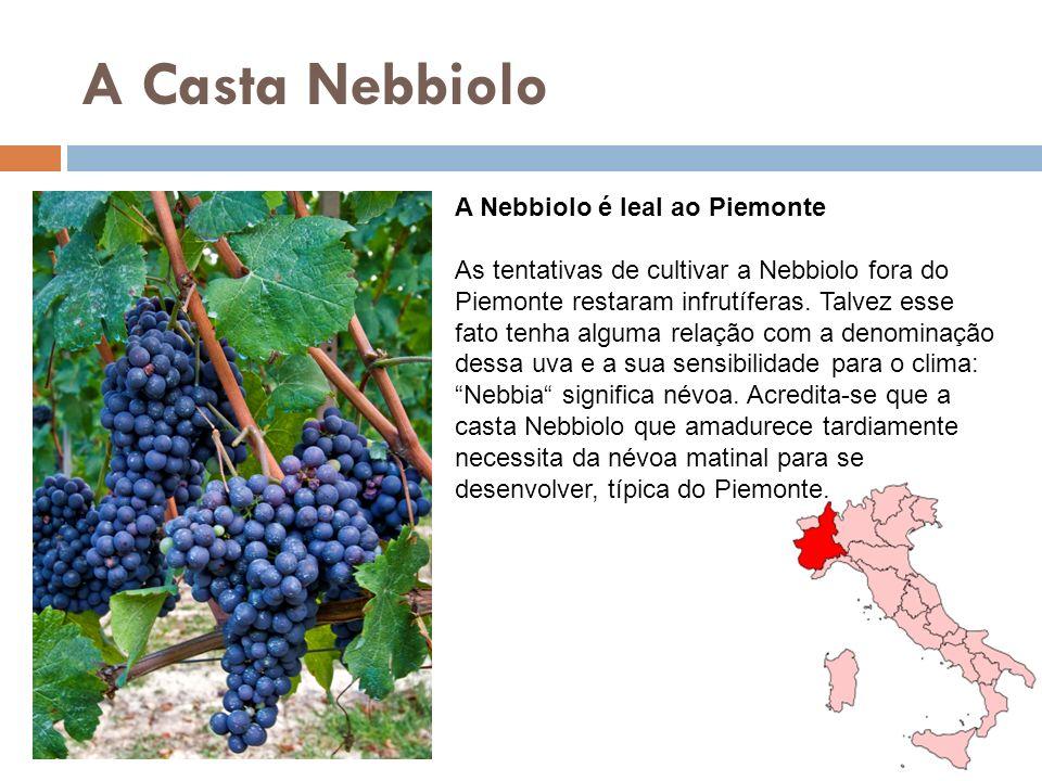 A Casta Nebbiolo A Nebbiolo é leal ao Piemonte