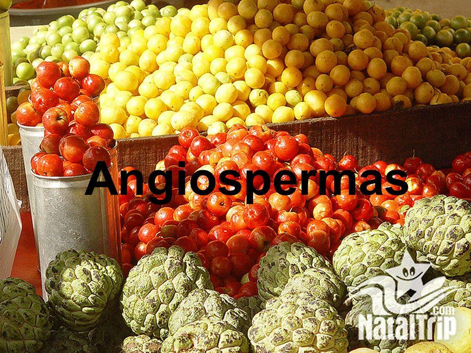 Angiospermas
