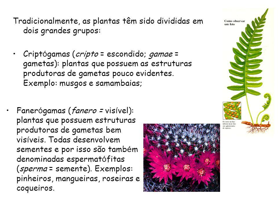 Tradicionalmente, as plantas têm sido divididas em dois grandes grupos: