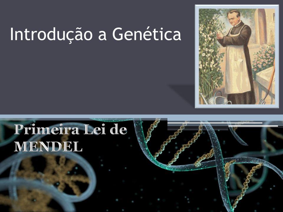 Introdução a Genética Primeira Lei de MENDEL