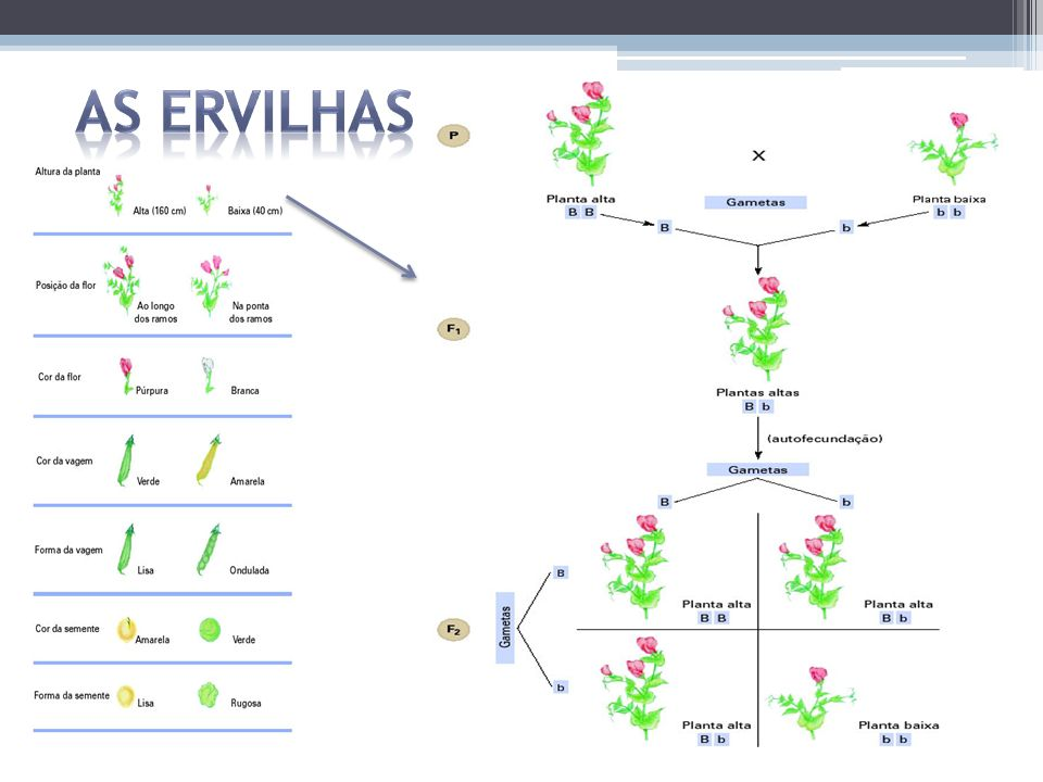 As ervilhas