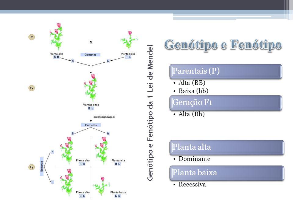 Genótipo e Fenótipo da 1 Lei de Mendel