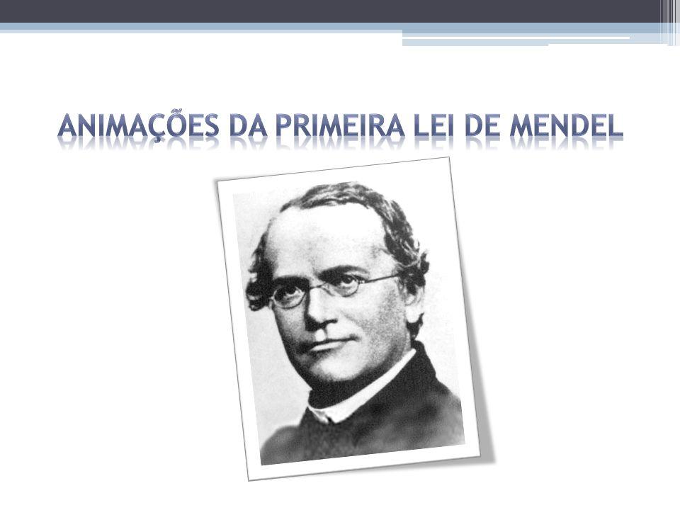 Animações da Primeira Lei de Mendel