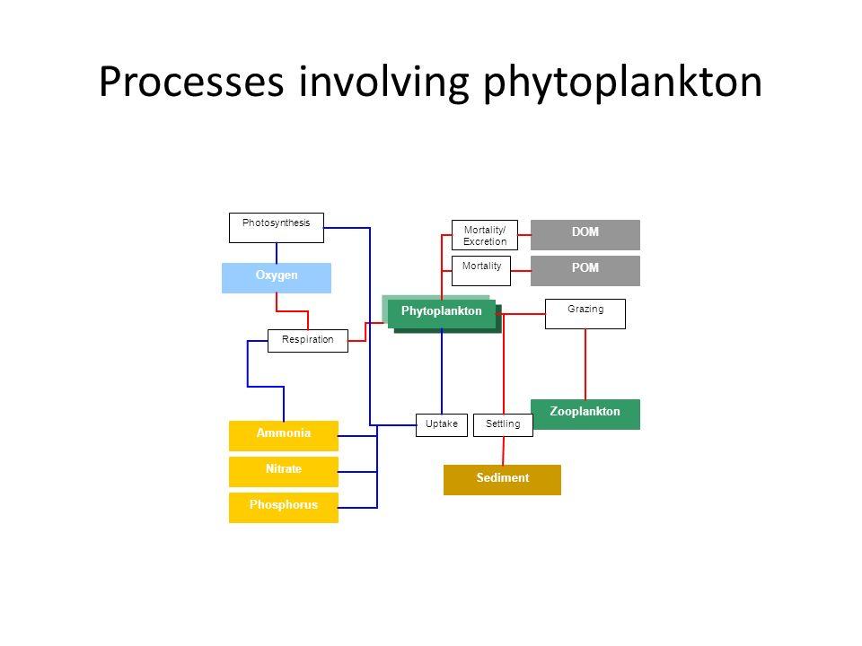 Processes involving phytoplankton