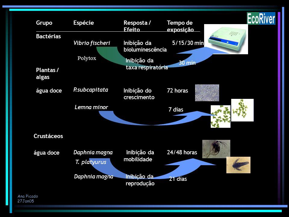 Plantas / algas Vibrio fischeri Bactérias Grupo Espécie Tempo de