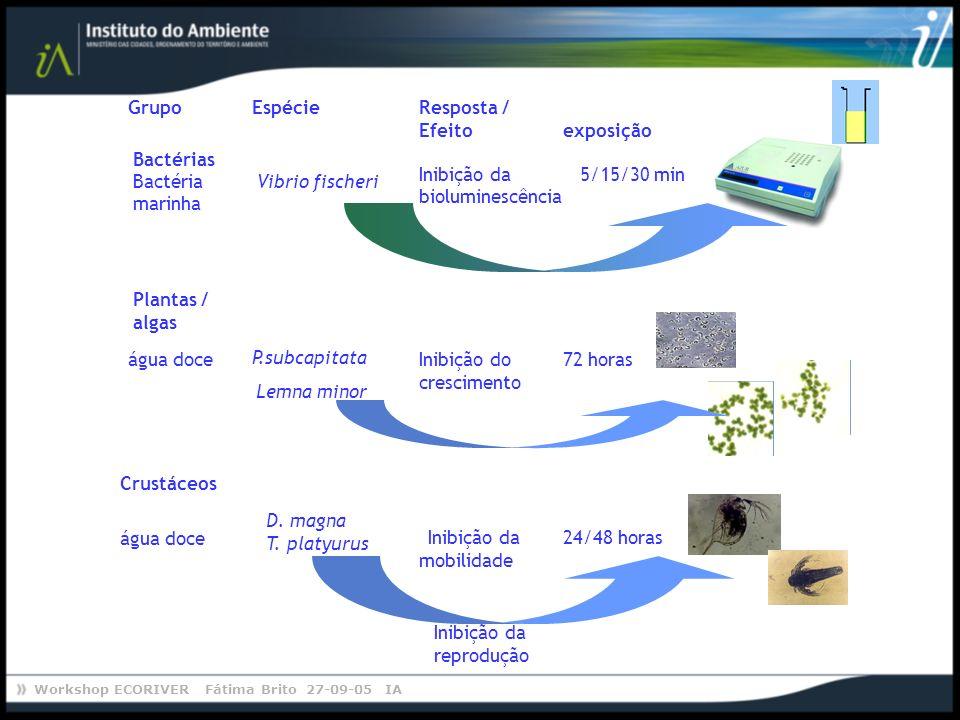 Efeito Vibrio fischeri. Bactéria. marinha. Bactérias. Grupo. Espécie. Resposta / exposição. Inibição da.