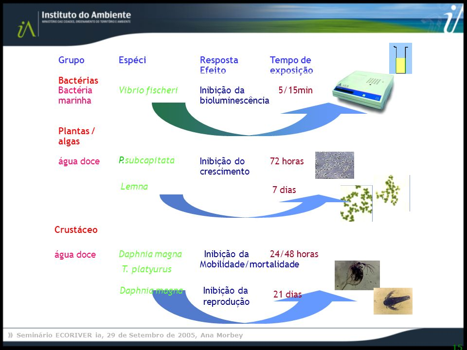 Plantas / algas. Vibrio fischeri. Bactéria. marinha. Bactérias. Grupo. Espécie. Tempo de. Resposta /