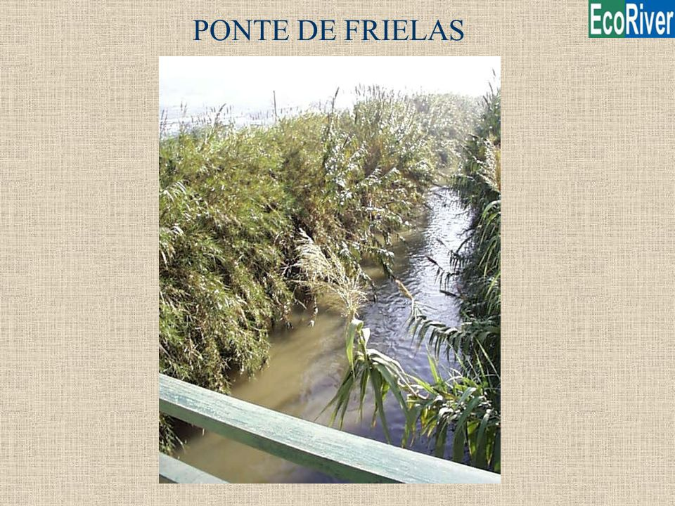 PONTE DE FRIELAS