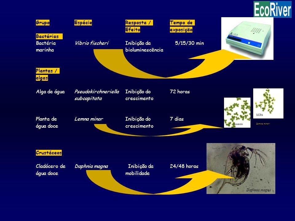 Daphnia magna Tempo de Grupo Espécie Resposta / Efeito exposição