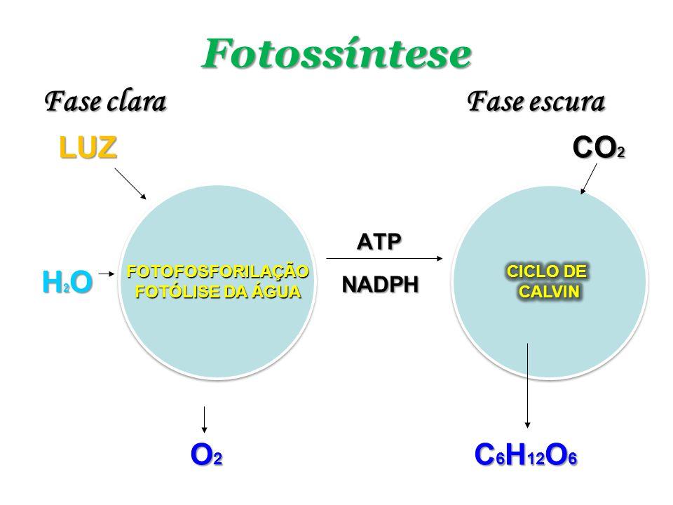 Fotossíntese Fase clara Fase escura LUZ CO2 ATP H2O NADPH O2 C6H12O6