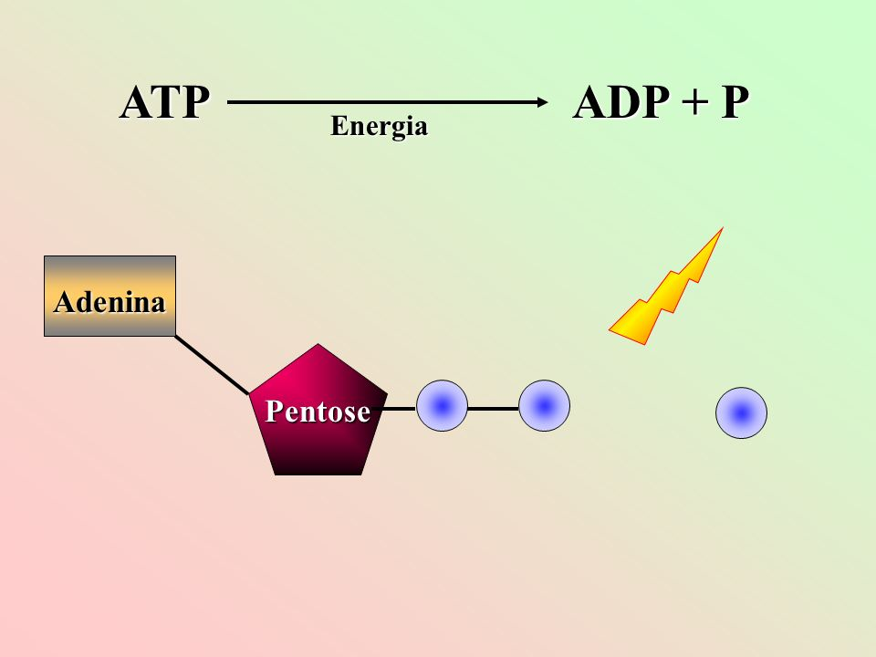 ATP ADP + P Energia Adenina Pentose