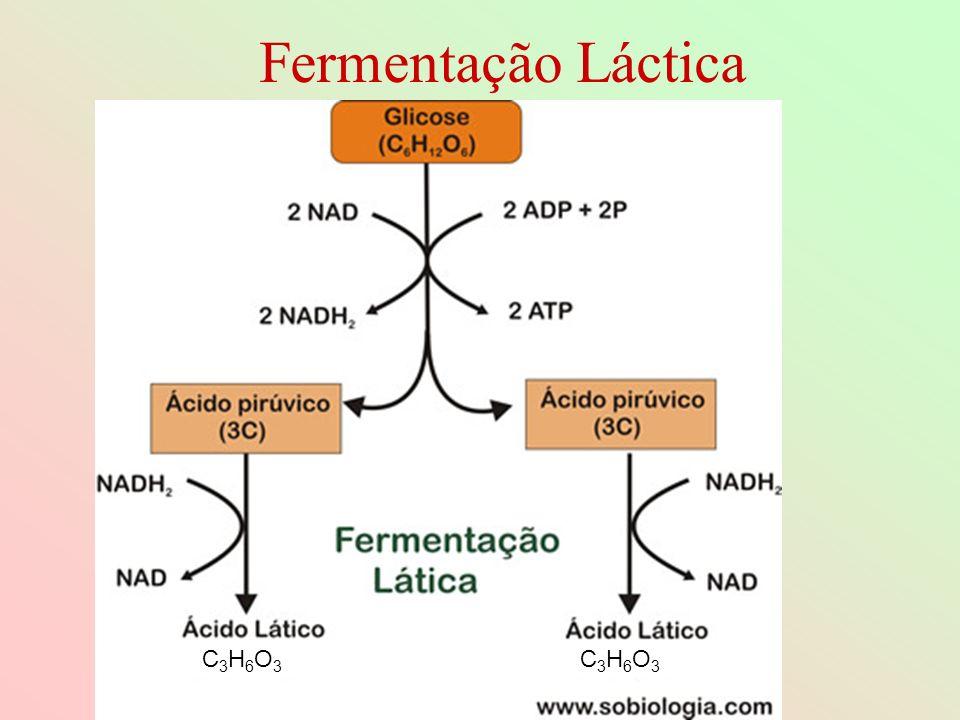 Fermentação Láctica C3H6O3 C3H6O3