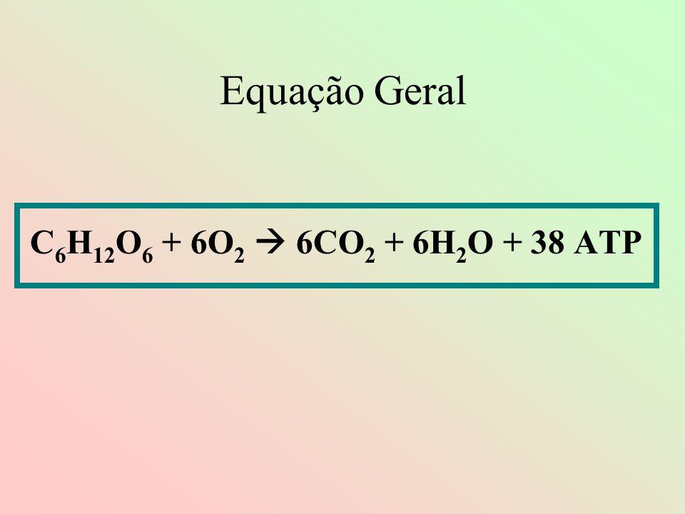 Equação Geral C6H12O6 + 6O2  6CO2 + 6H2O + 38 ATP