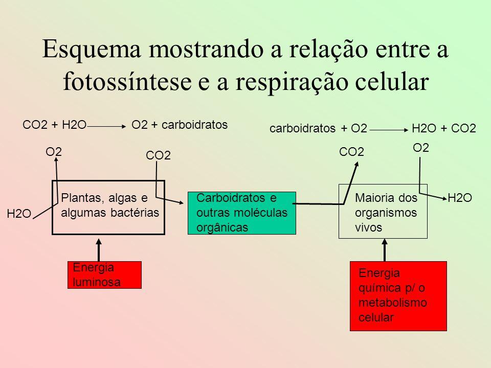 Esquema mostrando a relação entre a fotossíntese e a respiração celular