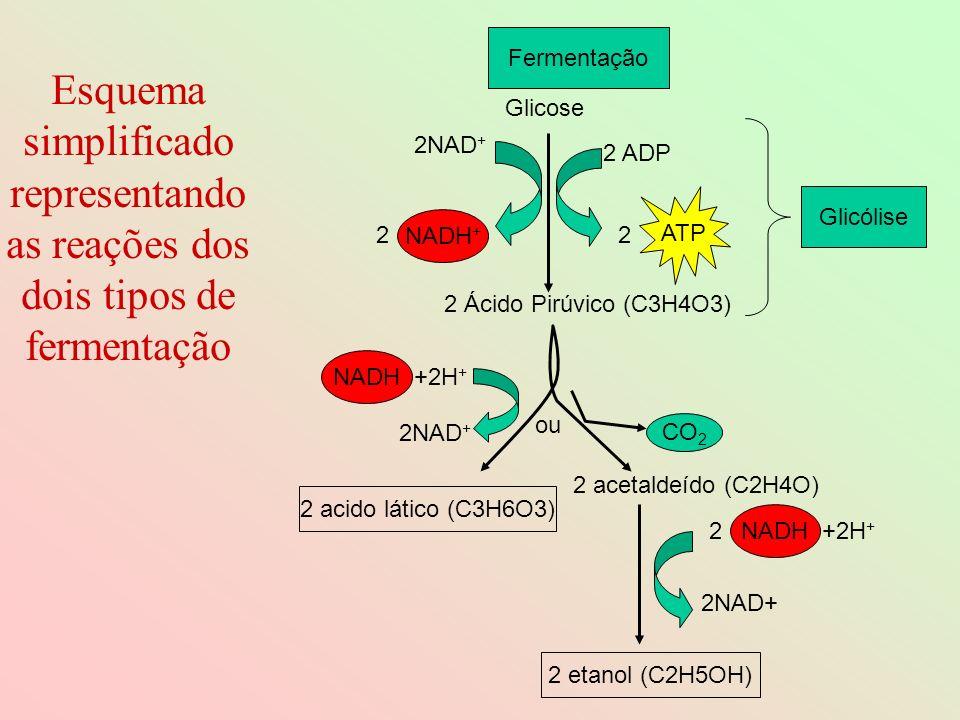 Esquema simplificado representando as reações dos dois tipos de fermentação