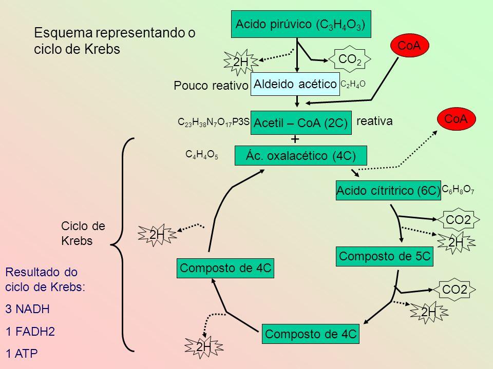 + Esquema representando o ciclo de Krebs Acido pirúvico (C3H4O3) CoA
