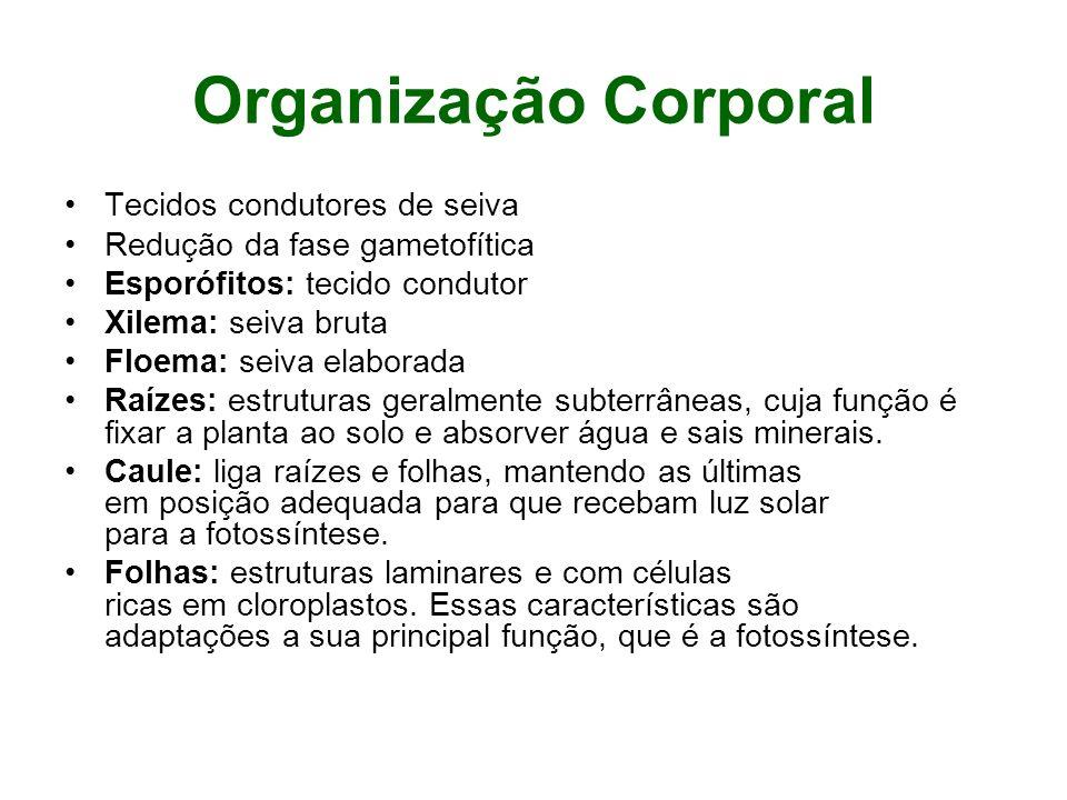 Organização Corporal Tecidos condutores de seiva