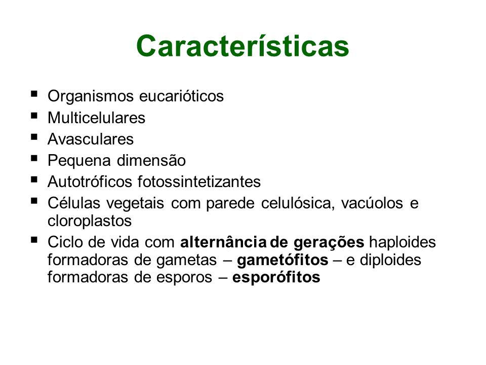 Características Organismos eucarióticos Multicelulares Avasculares